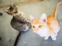 Cute kittens staring up. Kittens staring up, beautiful light Stock Photos