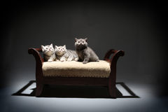 Cute kittens on a stool looking above Royalty Free Stock Photos