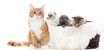 Cute kittens Stock Photo