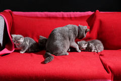 Cute kittens with their mother Royalty Free Stock Photos