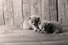 Small kittens on a wooden background Stock Photography