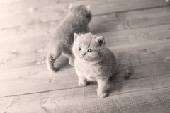 Small kittens on a wooden background Stock Photo