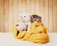 Cute kittens in yellow cotton at wooden background Royalty Free Stock Photos