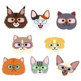 Cute kitties face with eyeglasses set. School, classroom, learning, homework royalty free illustration