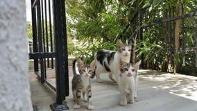 cute kitties Stock Image
