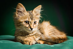 A cute kitty. Sitting on a pillow Royalty Free Stock Photography