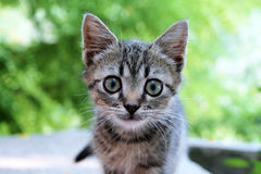Cute kitty Stock Images
