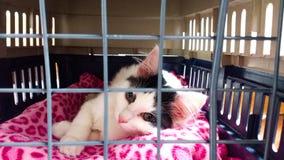 Cute kitty animal pet cat Stock Photo