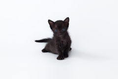 Cute kitty balck cat looking on white background Royalty Free Stock Photos