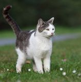 Cute kitty cat. Outdoors on a green lawn stock images