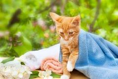 Cute kitty cat Stock Photo