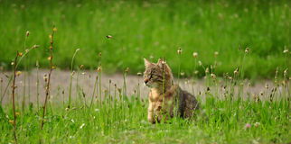 Cat in the grass Royalty Free Stock Photos