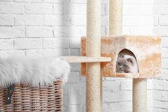 Cute kitty on cat tree. At home royalty free stock photos
