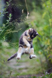 Cute kitty in funny jump Royalty Free Stock Photo