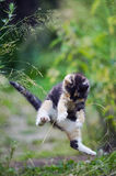 Cute kitty in funny jump Stock Photo