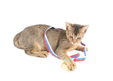 Cute kitty with gold medal Stock Image