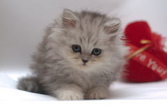 Cute kitty with heart Stock Photography
