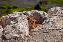 Cute Kitty hiding, Al Khobar, Saudi Arabia.  stock photography