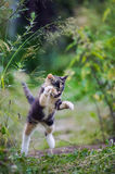 Cute kitty in hunting game Royalty Free Stock Images