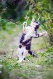 Cute kitty jump in a game. Multicoloured cute kitty jump in a game on the garden royalty free stock image
