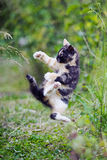 Cute kitty in karate style jump Stock Photography