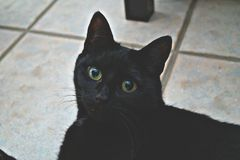Cute kitty. My cat chilling on the floor Royalty Free Stock Photography