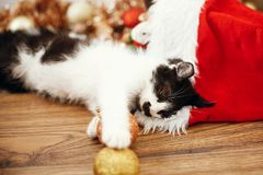 Cute kitty playing with red and gold baubles in box, ornaments a stock photography