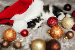 Cute kitty sleeping in santa hat on bed with gold and red christ royalty free stock image