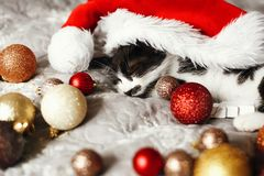 Cute kitty sleeping in santa hat on bed with gold and red christ stock photos
