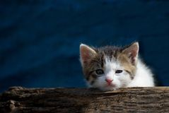 Cute kitty Royalty Free Stock Image