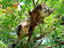 Cute kitty stuck in a tree stock photos