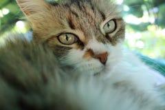Cute kitty Royalty Free Stock Photo