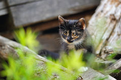 Cute kitty on wood Royalty Free Stock Image