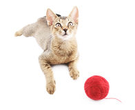 Cute kitty with wool ball Stock Image