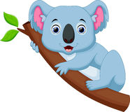 Cute koala cartoon on a tree Stock Image