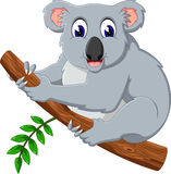 Cute koala cartoon on a tree Stock Image