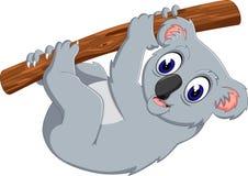 Cute koala holding tree Stock Photography