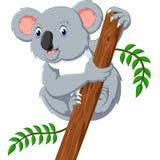 Cute koala Stock Photo