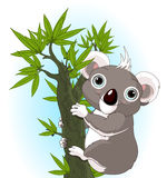 Cute koala on a tree Stock Images