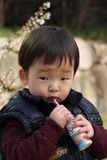 Cute Korean Kid Royalty Free Stock Photography