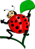 Cute lady bug cartoon Royalty Free Stock Images