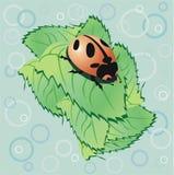 Cute ladybird Stock Photo