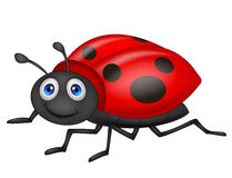 Cute ladybug cartoon Stock Photography