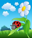 Cute ladybug with flower. Illustration Royalty Free Stock Photo