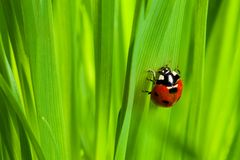 Cute ladybug on the grass Stock Images