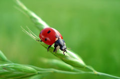 Cute LadyBug - Happyness sign Stock Images