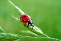 Cute LadyBug - Happyness sign. Cute small LadyBug - Happyness sign Stock Images