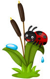 cute ladybug Royalty Free Stock Photos