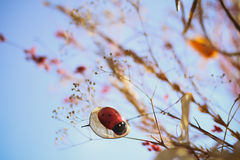 Cute ladybug. In the macro world Stock Photo