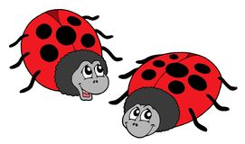 Cute ladybugs vector illustration. Cute ladybugs on white background - vector illustration Royalty Free Stock Images